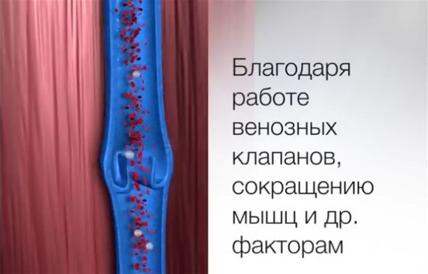 Венозные клапаны
